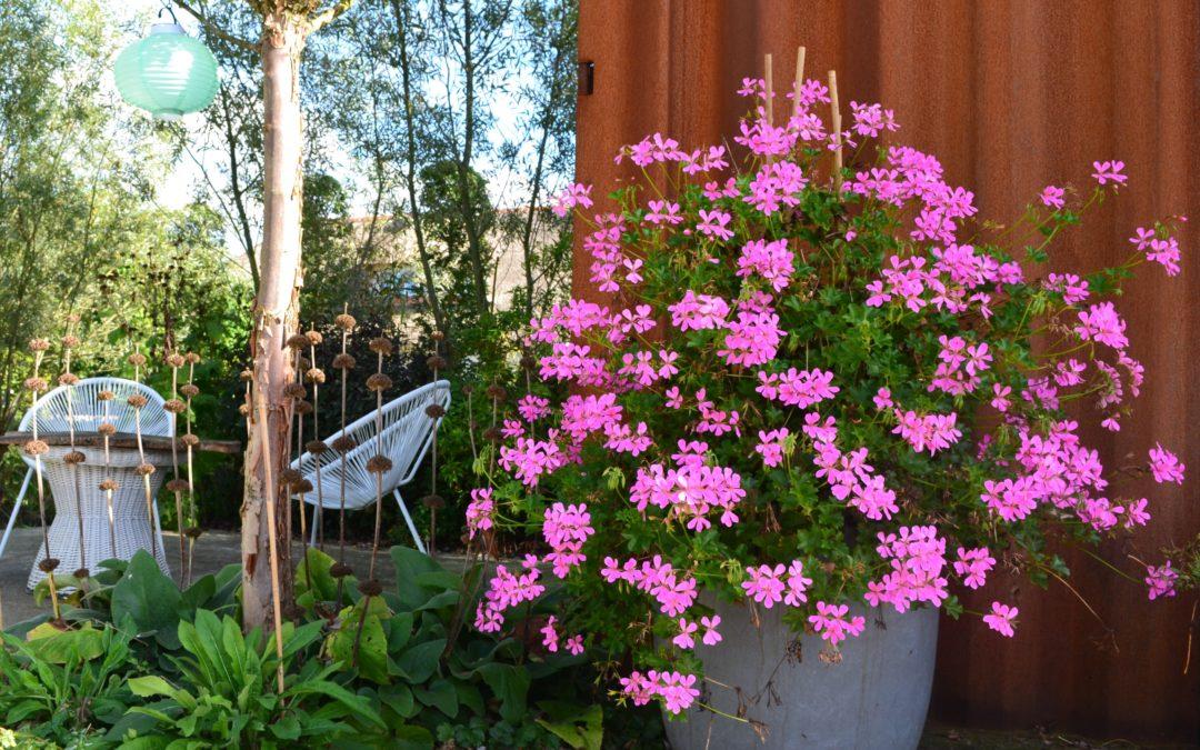 Potten en planten